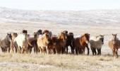 Mongolei im Winter - Mongolisches Pferdefestival