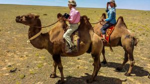 Kamelreiten Mongolei