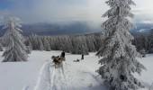 Karpaten - Hundeschlitten- und Wellnesskurzurlaub