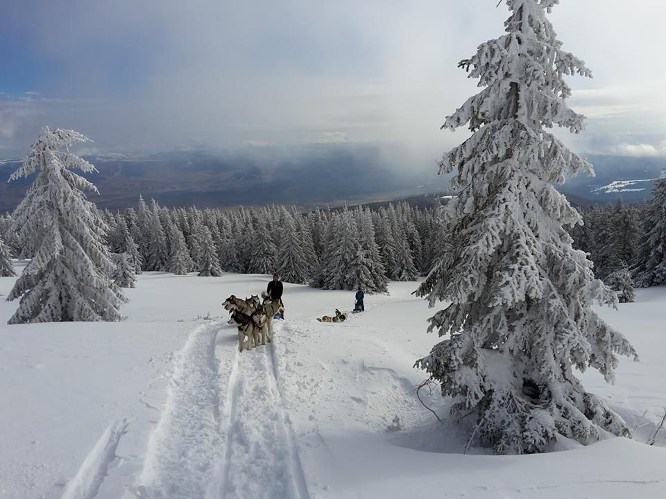 Hundeschlittentour in den Karpaten mit Go East Reisen