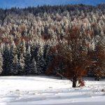 Winter-Schnee-See