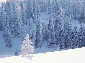 Langlauftour Sibirien Wald Baikalsee