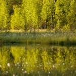 Kiwatsch, Karelien