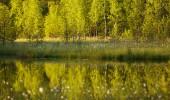 Kareliens Vielfalt 7 Tage