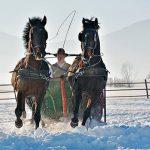 Schnee-Pferdeschlitten-Berge-Karpaten