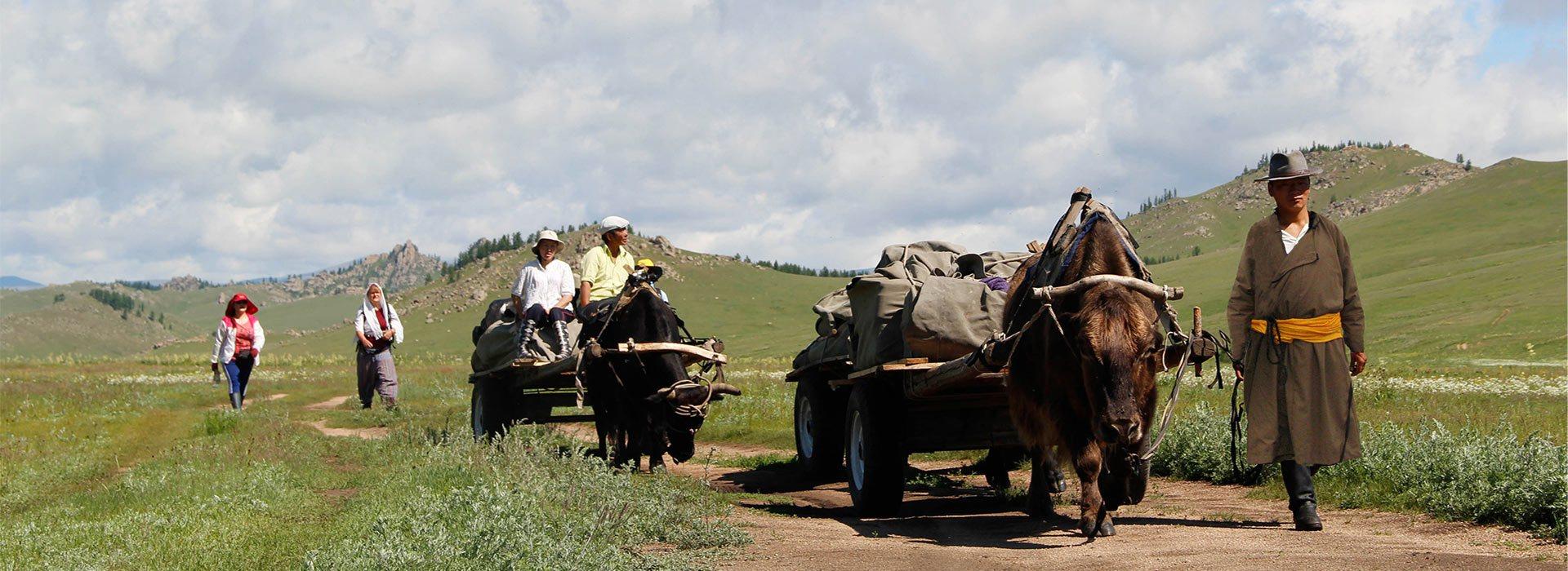 yak-trekking-1-1