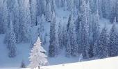 Langlauftour im Sibirischen Wald