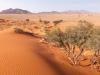 Desert Quiver Elim Dune