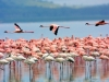 Lake-Nakuru-National-Park_preview