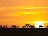 sunrise-in-serengeti-national-park-tanzania_preview