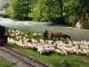 Waldbahn Viseu, Rumänien Reise